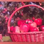 Коврик придверный резиновый Яблоки