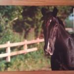 Коврик придверный резиновый Конь