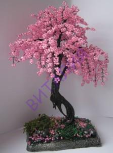 розовое бисерное дерево
