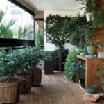 Устраиваем зимний сад в квартире