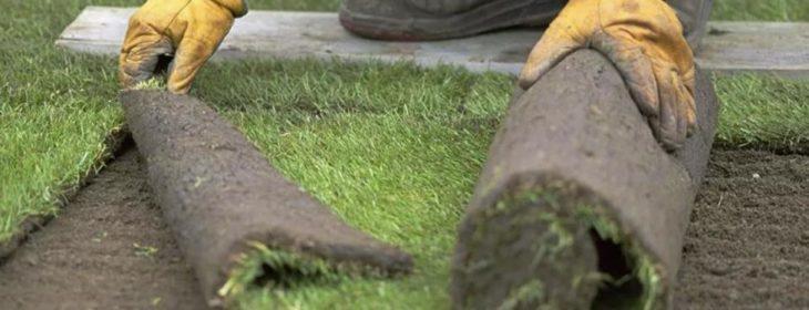 рулонный газон в нижнем